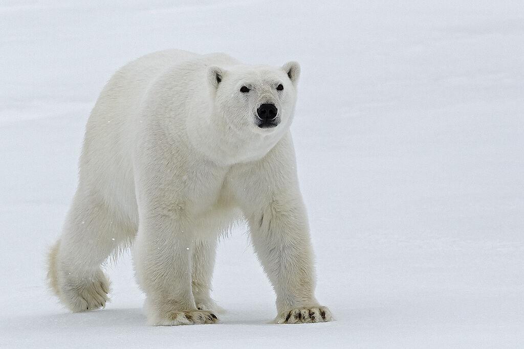 Spitzbergen - Malkurse und Fotokurse, wo andere Urlaub machen